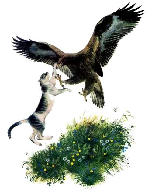 Иллюстрация к сказке Орел и кошка