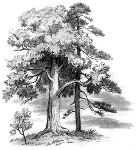 Иллюстрация к сказке Спор деревьев