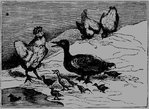Иллюстрация к сказке Волька